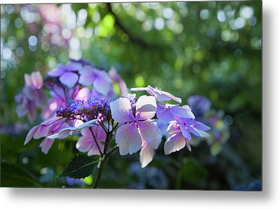 Metal Print featuring the photograph Enchanted Hydrangea by Theresa Tahara
