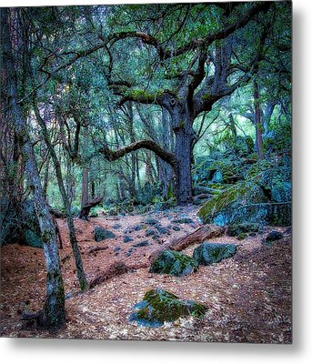 Enchanted Metal Print by Jerry Golab