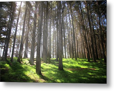 Enchanted Metal Print by Laurie Search