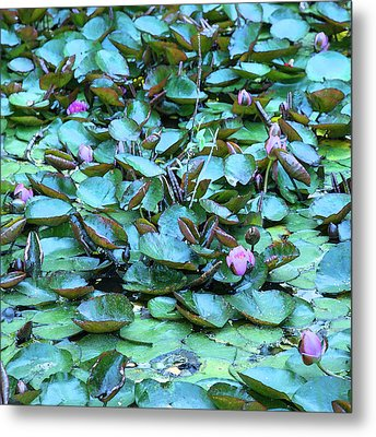 Metal Print featuring the photograph Painted Water Lilies by Theresa Tahara
