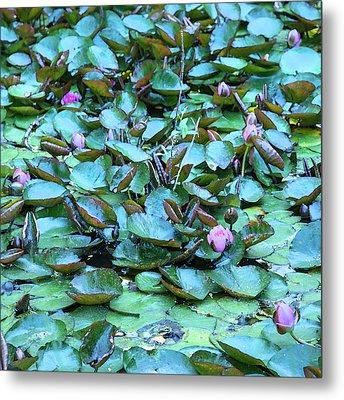 Painted Water Lilies Metal Print by Theresa Tahara