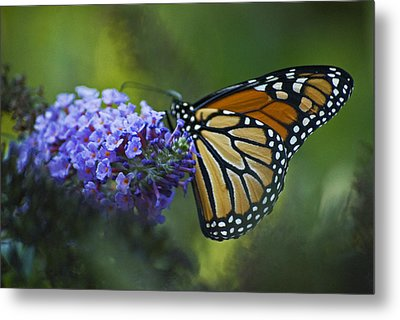 Enchanting Monarch Metal Print by Elsa Marie Santoro
