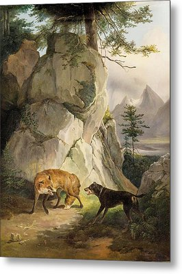 Encounter Of Fox And Dog In Rocky Landscape Metal Print by MotionAge Designs