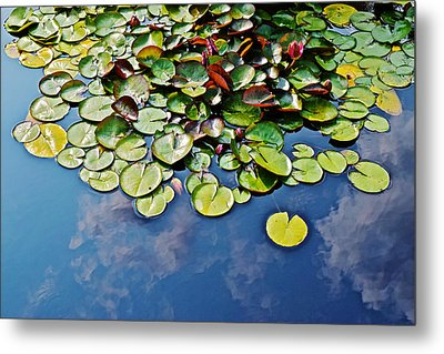 End Of July Water Lilies In The Clouds Metal Print by Janis Nussbaum Senungetuk