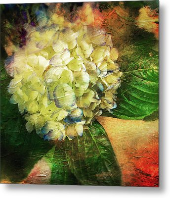 Endless Summer Metal Print by Colleen Taylor