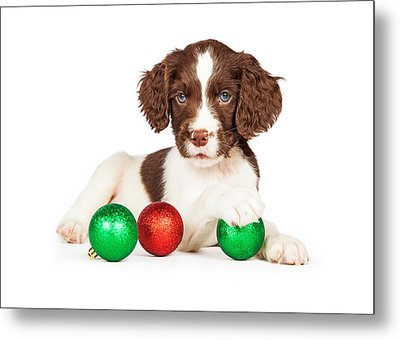 English Springer Spaniel Puppy With Christmas Baubles Metal Print