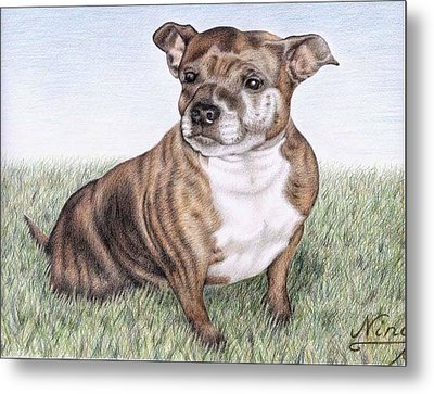 English Staffordshire Terrier Metal Print by Nicole Zeug