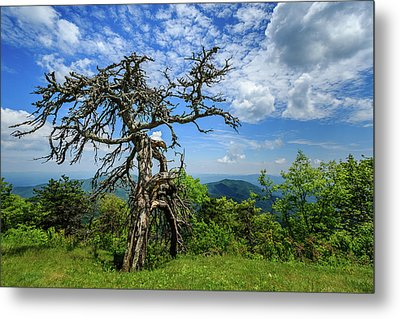 Ent At The Top Of The Hill - Color Metal Print by Joni Eskridge