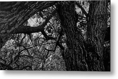 Enter The Woods In Black And White Metal Print