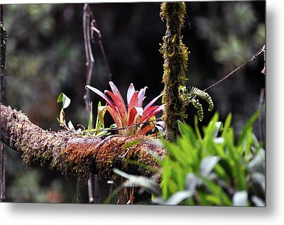 Epiphytic Plants Metal Print