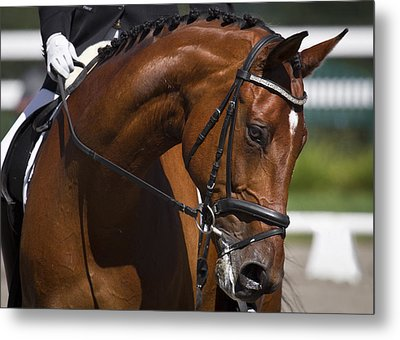 Equestrian At Work Metal Print by Wes and Dotty Weber