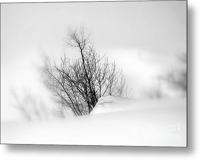 Essence Of Winter Metal Print by Elfriede Fulda