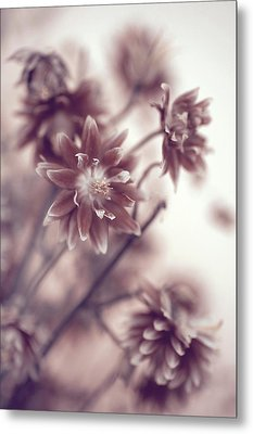 Metal Print featuring the photograph Eternal Flower Dreams  by Jenny Rainbow