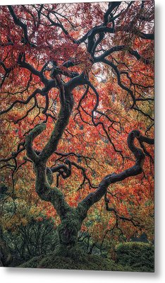 Ethereal Tree Metal Print by Darren White