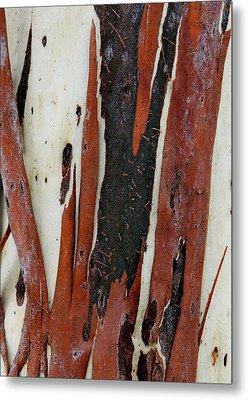 Eucalyptus Bark Abstract 2 Metal Print