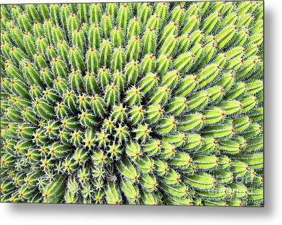 Euphorbia Metal Print by Delphimages Photo Creations