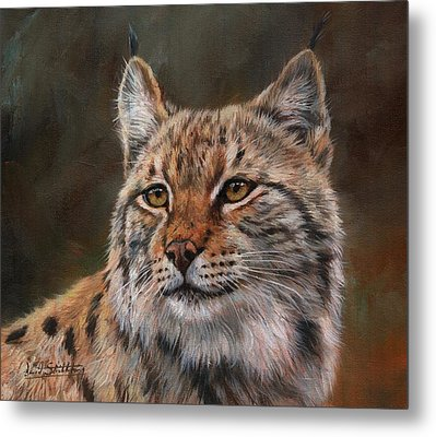 Eurasian Lynx Metal Print by David Stribbling