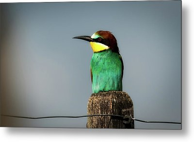 Metal Print featuring the photograph European Bee Eater by Wolfgang Vogt
