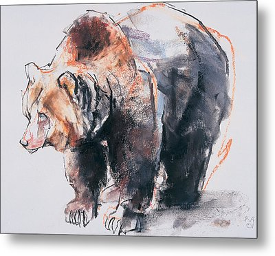 European Brown Bear Metal Print