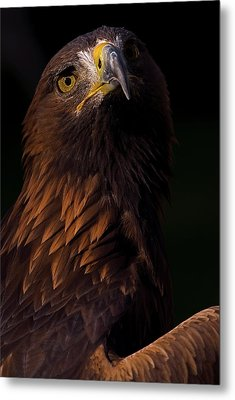 Metal Print featuring the photograph European Golden Eagle by JT Lewis