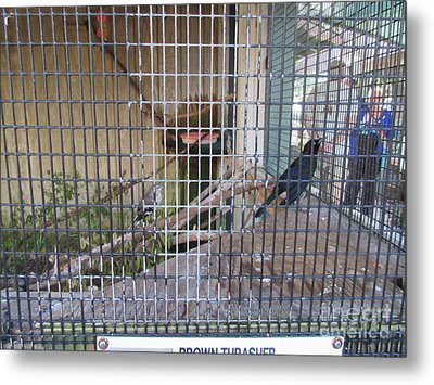European Starling Metal Print by Frederick Holiday