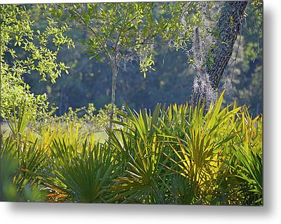 Metal Print featuring the photograph Evening Foliage by Bruce Gourley