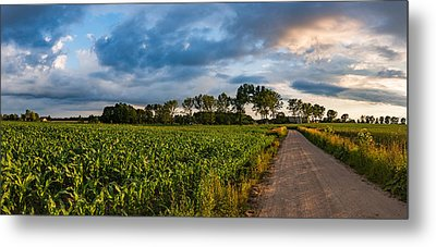 Metal Print featuring the photograph Evening In A Cornfield by Dmytro Korol