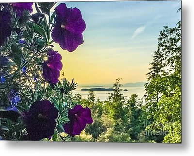 Evening Light On Orcas Island Metal Print by William Wyckoff
