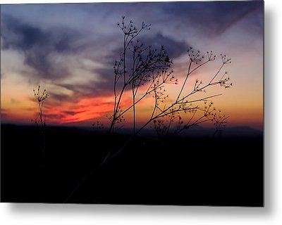 Evening Light Over Meadow Metal Print