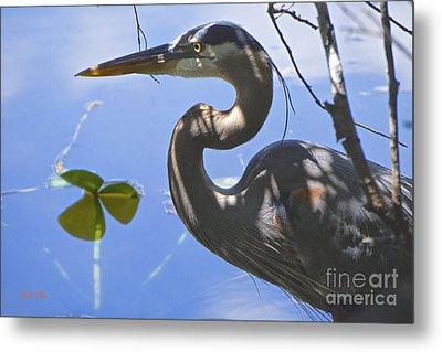 Everglades Beauty Metal Print by Judy Kay