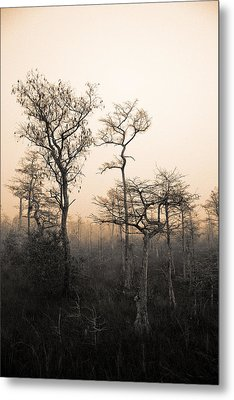 Everglades Cypress Stand Metal Print