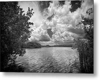 Everglades Lake - 0278abw Metal Print by Rudy Umans
