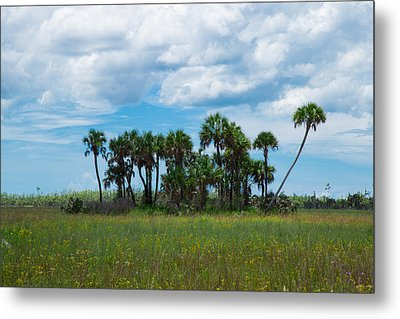 Everglades Landscape Metal Print by Christopher L Thomley