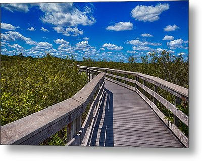 Everglades Trail Metal Print by Swank Photography