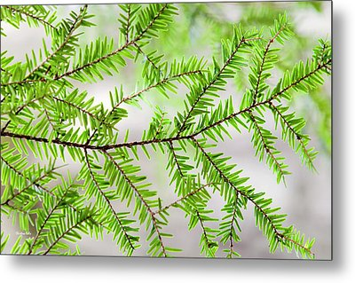 Metal Print featuring the photograph Evergreen Abstract by Christina Rollo