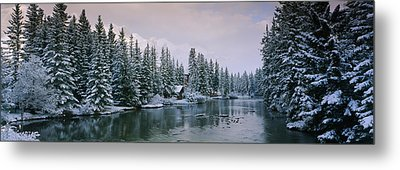 Evergreen Trees Covered With Snow Metal Print by Panoramic Images