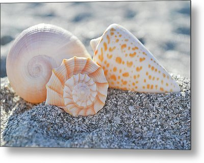 Metal Print featuring the photograph Every Shell Has A Story by Melanie Moraga