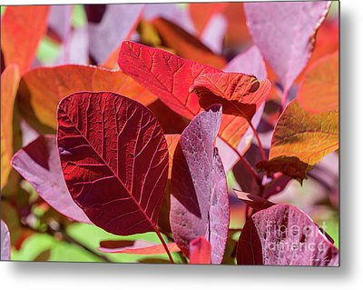 Metal Print featuring the photograph Everything Is Extraordinary by Linda Lees
