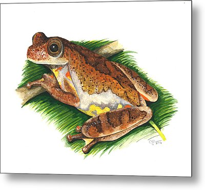 Executioner Treefrog Metal Print by Cindy Hitchcock