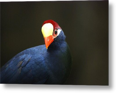 Metal Print featuring the photograph Exotic Bird by Heidi Poulin