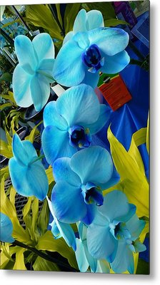 Exotic Blue Orchids Metal Print by Jeanette Oberholtzer