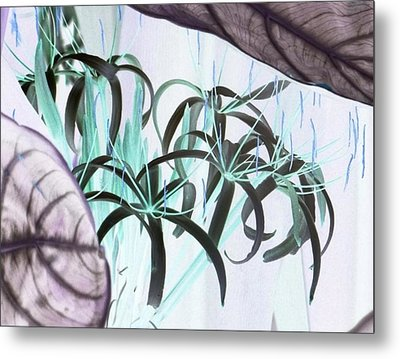 Exotic Flowers As Fine Art Metal Print by Linda McAlpine