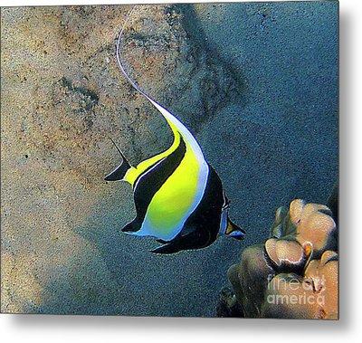 Exotic Reef Fish  Metal Print by Bette Phelan