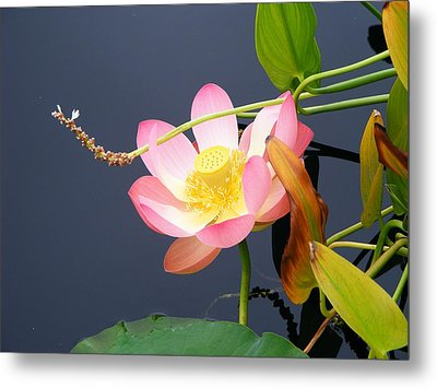 Metal Print featuring the photograph Exotic Waterlily by Margie Avellino