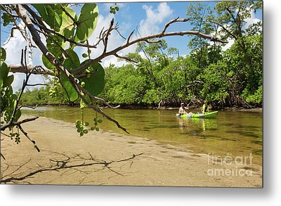 Exploring South Florida's Wilderness - Father And Son Kayaking Metal Print