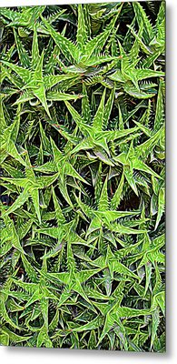 Metal Print featuring the photograph Expressionalism Aloevera by Aimee L Maher Photography and Art Visit ALMGallerydotcom