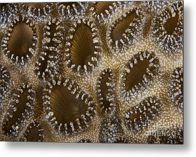 Extreme Close-up Of A Crust Anemone Metal Print by Terry Moore
