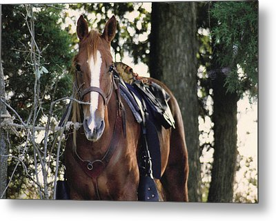Eye Contact Metal Print by Stacy C Bottoms