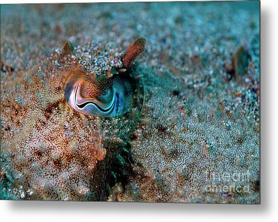 Eye Of A Common Cuttlefish Metal Print by Sami Sarkis