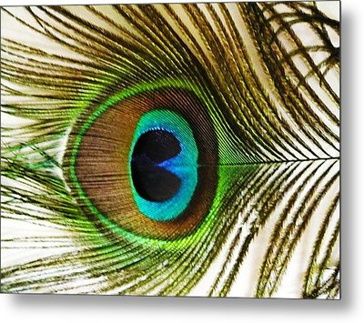 Eye Of Peacock Metal Print